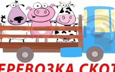 Перевозка скота.Скотовоз - Рубцовск, цены, предложения специалистов