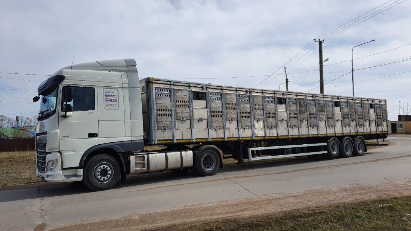 Перевозка животных и скота 8-965-920-08-80 - Барнаул, цены, предложения специалистов