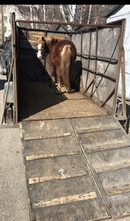 Перевозка скота - Барнаул, цены, предложения специалистов